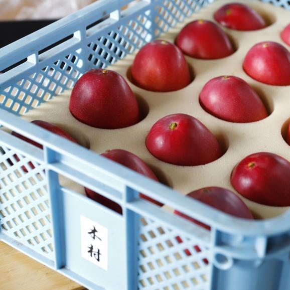きむら農園「時の雫《極み》」マンゴー 2玉化粧箱入り 4L05