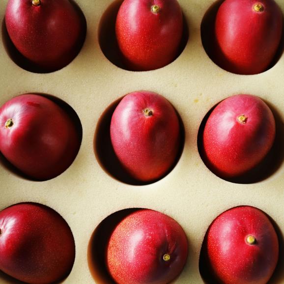 KIMURA FARM「時の雫《極み》」マンゴー 2玉化粧箱入り 4L06