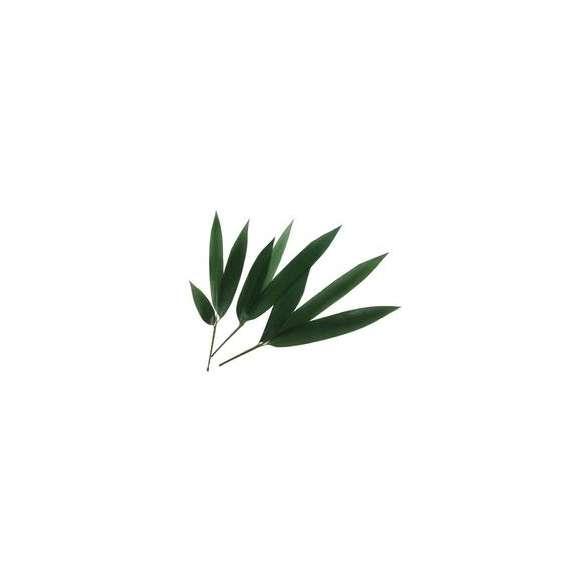 枝笹(10枚)02