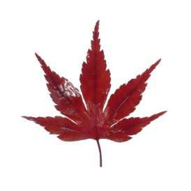 紅葉(赤)(10枚)