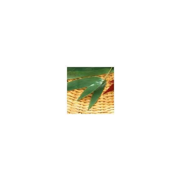 枝笹(100枚)01