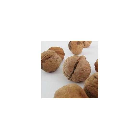 信州産 菓子くるみ殻付き(1kg)01