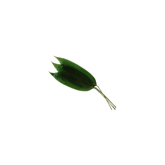 枝付き笹の葉(熊笹)(100枚)01