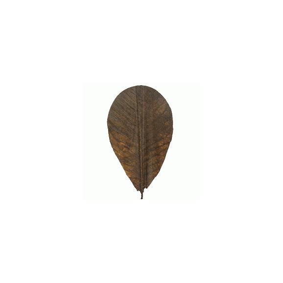 枯れ朴葉(100枚)01