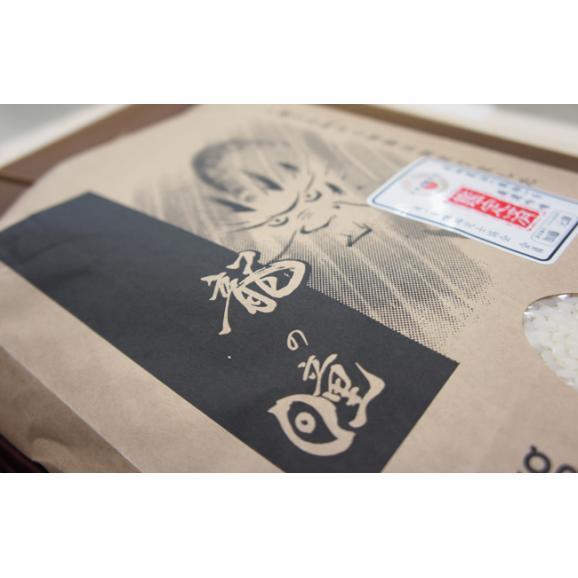 龍の瞳 いのちの壱 750g (5合) 29年産 【メール便 送料無料 (代引き・日時指定不可)】06