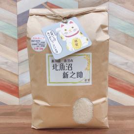 特別栽培米 雪室貯蔵米  新潟県北魚沼産 新之助 白米5kg