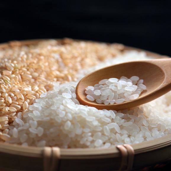 特別栽培米 魚沼産こしひかり 雪椿 5kg04