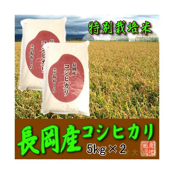 〔特別栽培米〕新潟県産コシヒカリ(長岡産) 10kg(令和元年産)【送料無料(本州のみ)】01