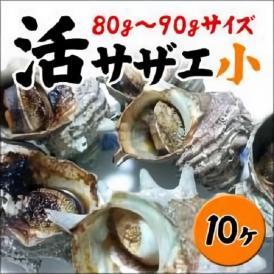 【業務用】<サザエ小サイズ10ヶ!(1ヶ80〜90g)>お刺身に、つぼ焼きに!