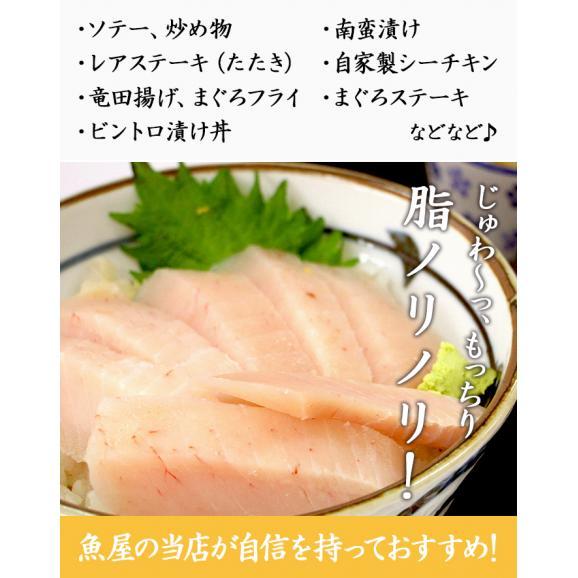 <びんとろマグロ刺身500g(びんちょう鮪・まぐろ)>瞬間冷凍!【冷凍便同梱可】05