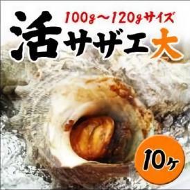 【業務用】<サザエ大サイズ10ヶ!(1ヶ100〜120g)>お刺身に、つぼ焼きに!