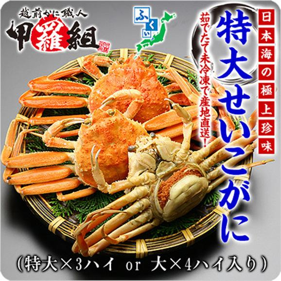 茹でたて未冷凍のプレミアム越前松葉せいこ蟹(特大3ハイもしくは大4ハイ入り/ご選択不可)