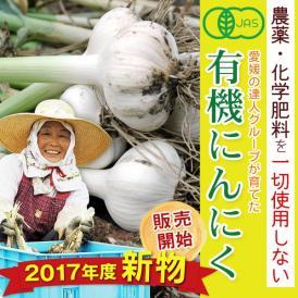 有機栽培の達人がつくる希少な有機品!【愛媛県産有機にんにく1kg】無農薬なので見た目は良くないけど安心安全・栄養・風味の良さでは絶対負けない自信作♪