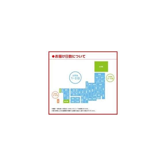 【送料無料】太陽のマテ茶525ml PET 24本入×2ケース〔コカ・コーラ〕〔代引不可〕03