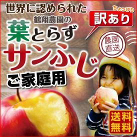 りんご 青森 葉とらず サンふじ ご家庭用 3kg(8~10玉) ちょっぴり 訳あり 送料無料 産直 世界が認めたリンゴ