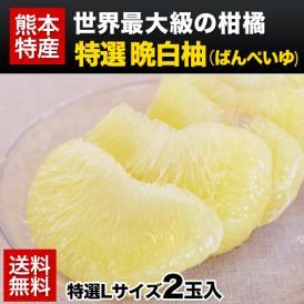 【送料無料】世界最大級の柑橘「晩白柚(バンペイユ)」【特選】Lサイズ2玉入《12月上旬-12月末頃より順次出荷》