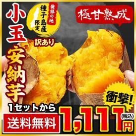 長期熟成 小玉 安納芋 1.5kg 訳あり 送料無料 小玉限定 本場種子島産 小玉安納芋 2S~3Sサイズ限定 芋 いも さつまいも あんのういも 《7-14営業日以内に出荷予定(土日祝日除く)》