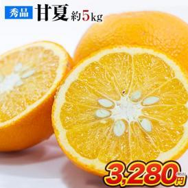 秀品 甘夏 みかん 約5kg / 3L~Sサイズ 送料無料 柑橘 の 名産地 熊本産 限定 旬 の みかん《7-14営業日以内に出荷(土日祝除く)》