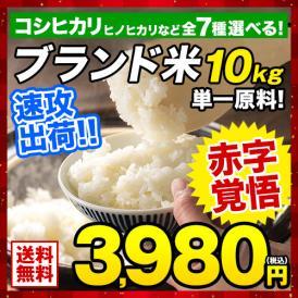 白米 10kg  森のくまさん コシヒカリ など 選べるお米 熊本県産 熊本銘柄 在庫処分 大特価《1-5営業日以内に出荷予定(土日祝日除く)》