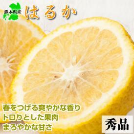 はるか 秀品 新品種のみかん 熊本県産 5kg 【送料無料 】