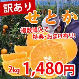 熊本県三角産 訳ありせとか2kg 【2箱購入で送料無料 3箱購入で1箱おまけ】