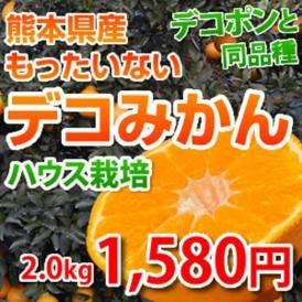 熊本県産 「もったいない」デコみかん 2kg 訳あり デコポン と同品種 不知火 【複数購入で特典満載】