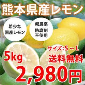 希少な国産レモン! 熊本県三角産レモン 5kg