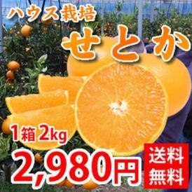 せとか 送料無料 希少品種 柑橘の女王 ハウス栽培 熊本県三角産  秀品2kg入