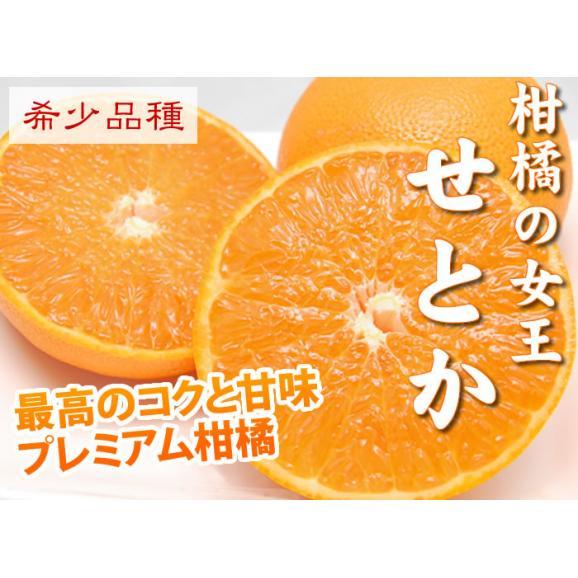 せとか 送料無料 希少品種 柑橘の女王 ハウス栽培 熊本県三角産  秀品2kg入03