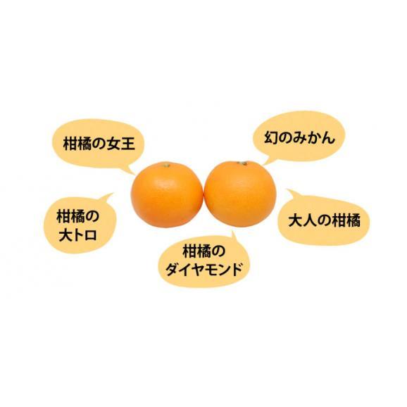 せとか 送料無料 希少品種 柑橘の女王 ハウス栽培 熊本県三角産  秀品2kg入04