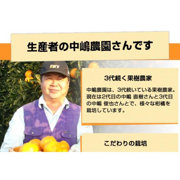 せとか 送料無料 希少品種 柑橘の女王 ハウス栽培 熊本県三角産  秀品2kg入05