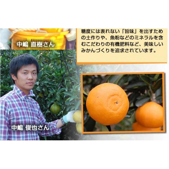 せとか 送料無料 希少品種 柑橘の女王 ハウス栽培 熊本県三角産  秀品2kg入06