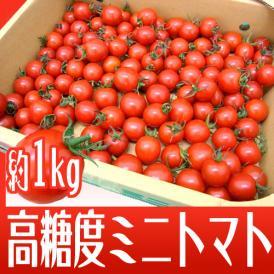 """和歌山産 フルーツミニトマト """"キャロルセブン"""" 約1kg【予約 11月中旬以降】"""