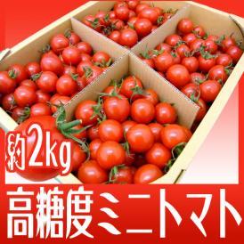 """【送料無料】和歌山産 フルーツミニトマト """"キャロルセブン"""" 約2kg【予約 11月中旬以降】"""
