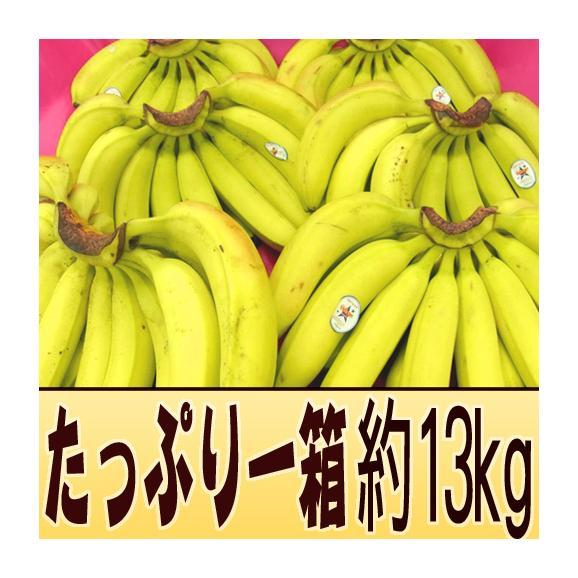 """フィリピン産 """"バナナ"""" 5~6房入り 約13kg01"""