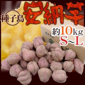 """【送料無料】種子島産 """"安納芋"""" S~Lサイズ 約10kg【予約 10月下旬以降】"""