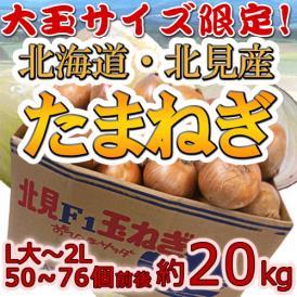 """【送料無料】北海道 北見F1 """"たまねぎ"""" 秀品 約20kg 大玉L~LLサイズ 玉葱"""