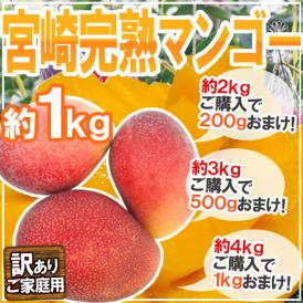 """【送料無料】""""宮崎マンゴー"""" 訳あり 2~4玉前後 約1kg《2kg購入で200g、3kg購入で500g、4kg購入で1kgおまけ》【予約 5月下旬以降】"""