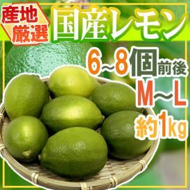 """【送料無料】""""国産レモン"""" 約1kg 6~8玉前後 M~L 産地厳選【予約 7月中下旬以降】"""