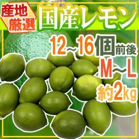 """【送料無料】""""国産レモン"""" 約2kg 12~18玉前後 M~L 産地厳選【予約 7月以降】"""