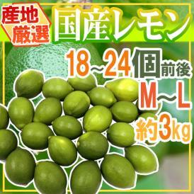 """【送料無料】""""国産レモン"""" 約3kg 18~24玉前後 M~L 産地厳選【予約 7月中下旬以降】"""
