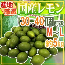 """【送料無料】""""国産レモン"""" 約5kg 30~40玉前後 M~L 産地厳選【予約 7月中下旬以降】"""