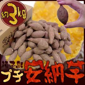 "種子島産 ""安納芋"" プチサイズ 約3kg【予約 10月下旬以降】 送料無料"