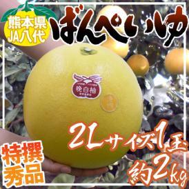 """熊本県八代特産 """"晩白柚"""" ばんぺいゆ 秀品 2Lサイズ 約2kg【予約 12月以降】"""