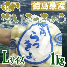 """徳島 鳴門産 """"洗いらっきょう"""" 秀品 約1kg Lサイズ《5キロ購入で送料無料》【予約 5月下旬以降】"""