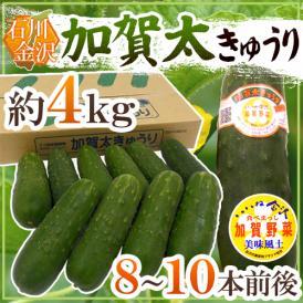"""石川県 加賀野菜 """"加賀太きゅうり"""" 8~10本 約4kg【予約 5月以降】"""