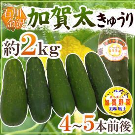 """石川県 加賀野菜 """"加賀太きゅうり"""" 4~5本前後 約2kg【予約 5月以降】"""