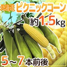 """【送料無料】北海道産 """"ピクニックコーン"""" 5~7本前後 約1.5kg 極甘とうもろこし【予約 8月中下旬~9月】"""