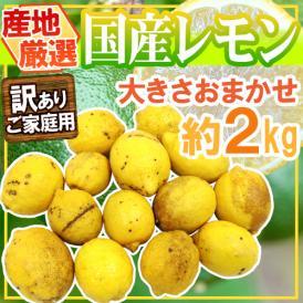 """【送料無料】""""完熟国産レモン"""" 訳あり 約2kg 大きさおまかせ 産地厳選【予約 8月以降】"""