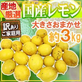 """【送料無料】""""完熟国産レモン"""" 訳あり 約3kg 大きさおまかせ 産地厳選【予約 8月以降】"""